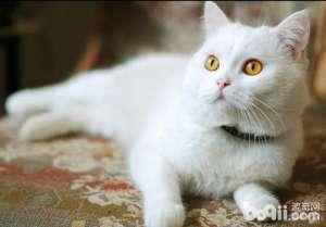 如何通过肢体语言和声音了解猫咪的心情-成猫饲养
